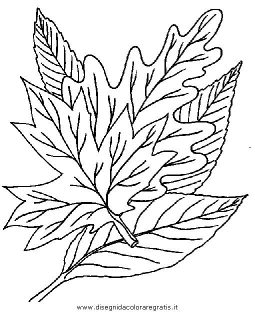 natura/autunno/natura_autunno_foglie_36.JPG