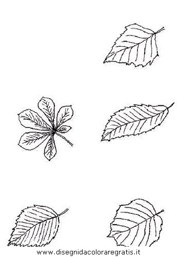 natura/autunno/natura_autunno_foglie_38.JPG