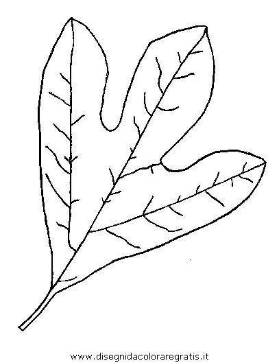 natura/autunno/natura_autunno_foglie_46.JPG