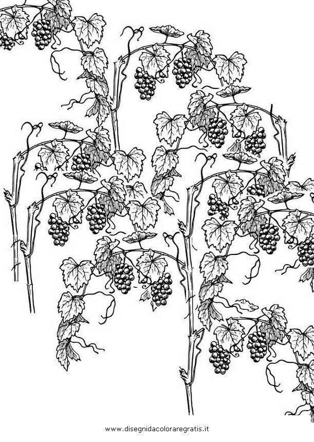 natura/autunno/vigna_7.JPG