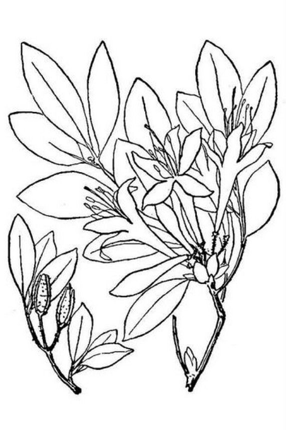 natura/fiori/azalea.jpg