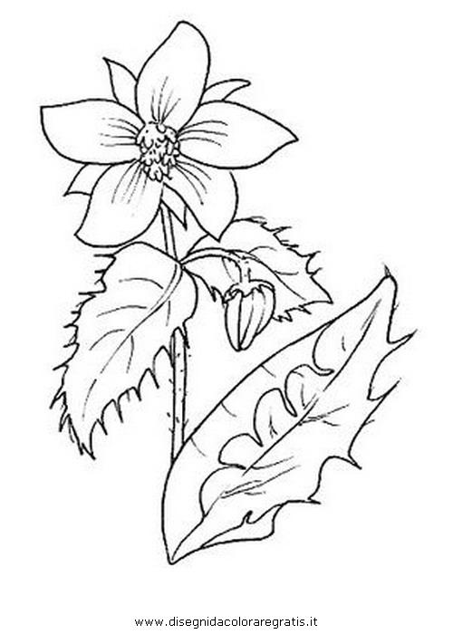 natura/fiori/borragine.JPG