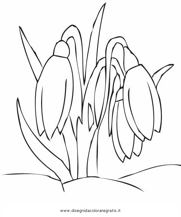 Disegno primule 03 categoria natura da colorare for Primule da colorare