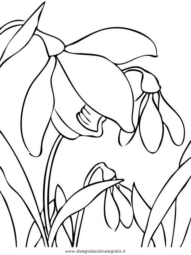 natura/fiori/bucaneve_03.JPG