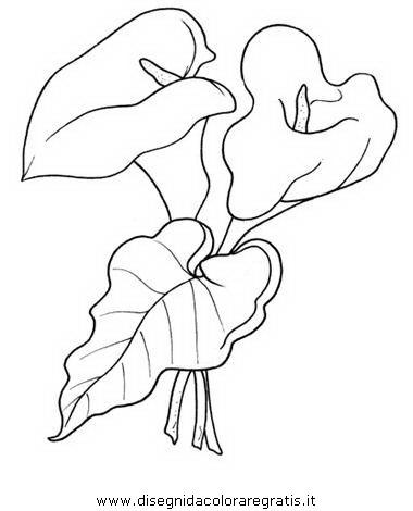 natura/fiori/calla_10.JPG