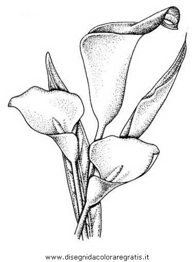 natura/fiori/calla_12.JPG