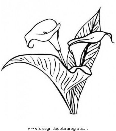 natura/fiori/calla_17.JPG