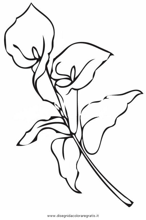 disegno calla