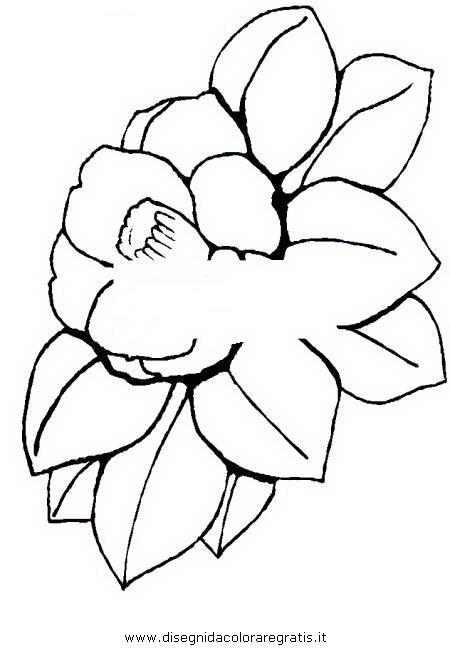 natura/fiori/camelia_0.jpg