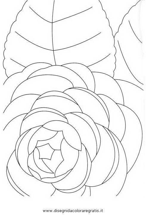 natura/fiori/camelia_1.jpg