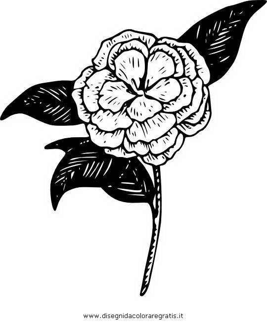 natura/fiori/camelia_2.jpg