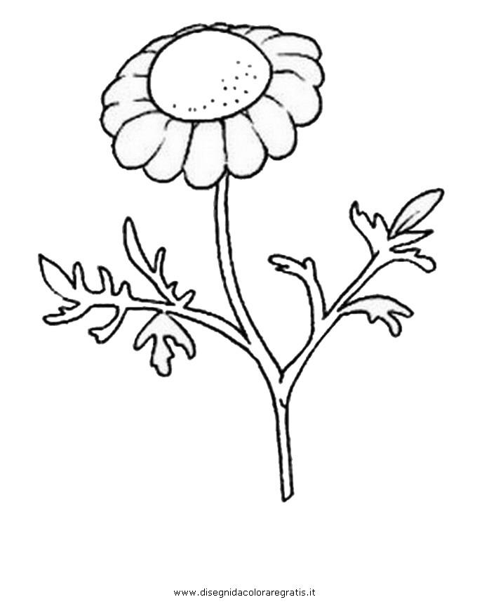 natura/fiori/camomilla.JPG