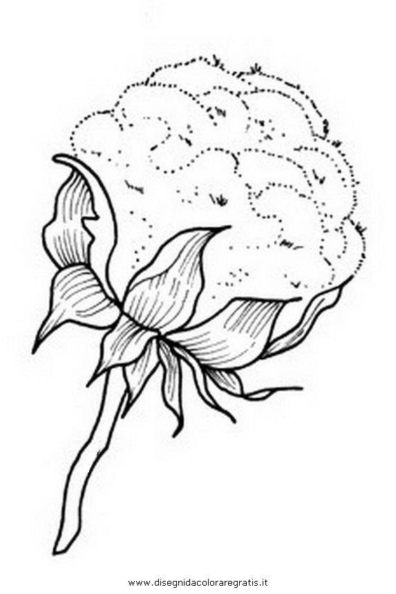 natura/fiori/cotone.JPG