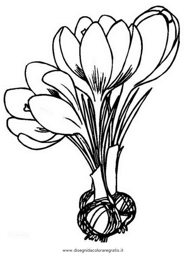 natura/fiori/crocus_1.JPG