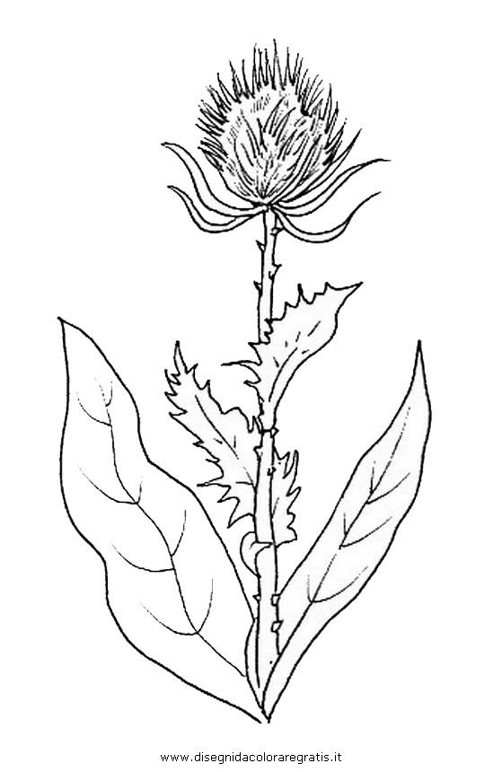 natura/fiori/fiore_cardo.JPG
