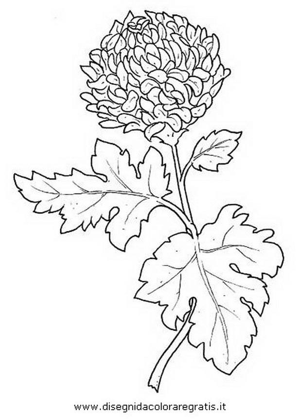 natura/fiori/fiore_crisantemo.JPG