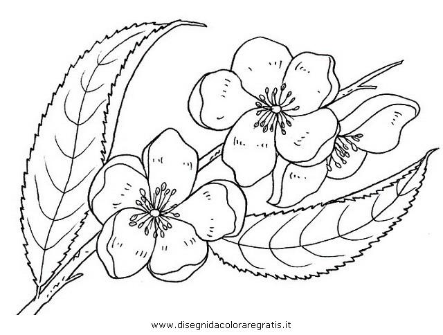 natura/fiori/fiore_di_pesco.JPG