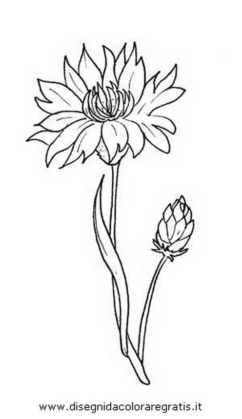 natura/fiori/fiore_fiordaliso.JPG