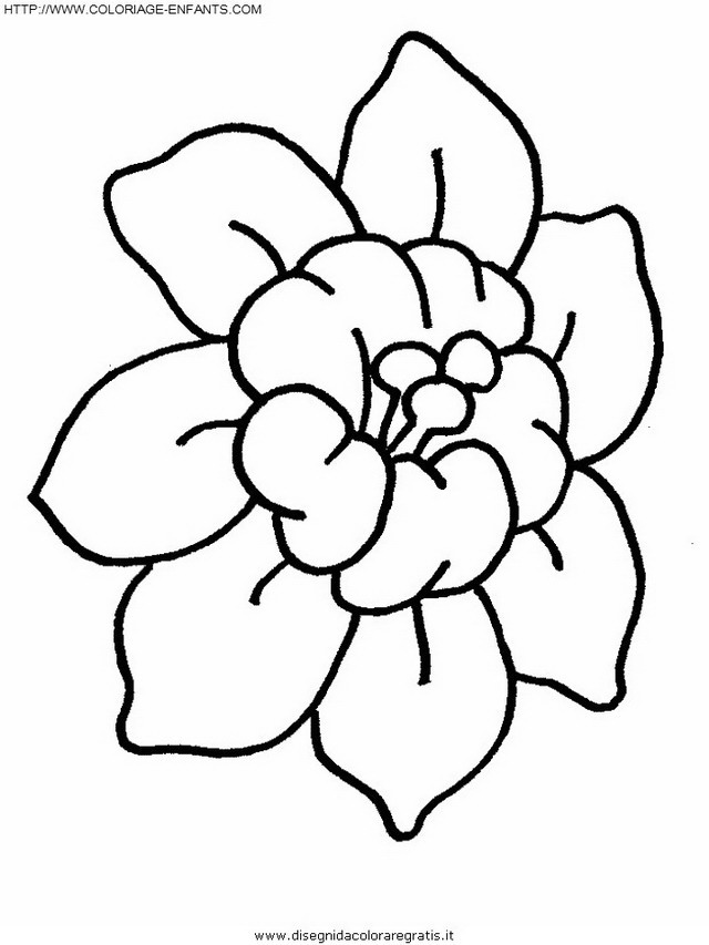 natura/fiori/fiore_fiori_176.JPG