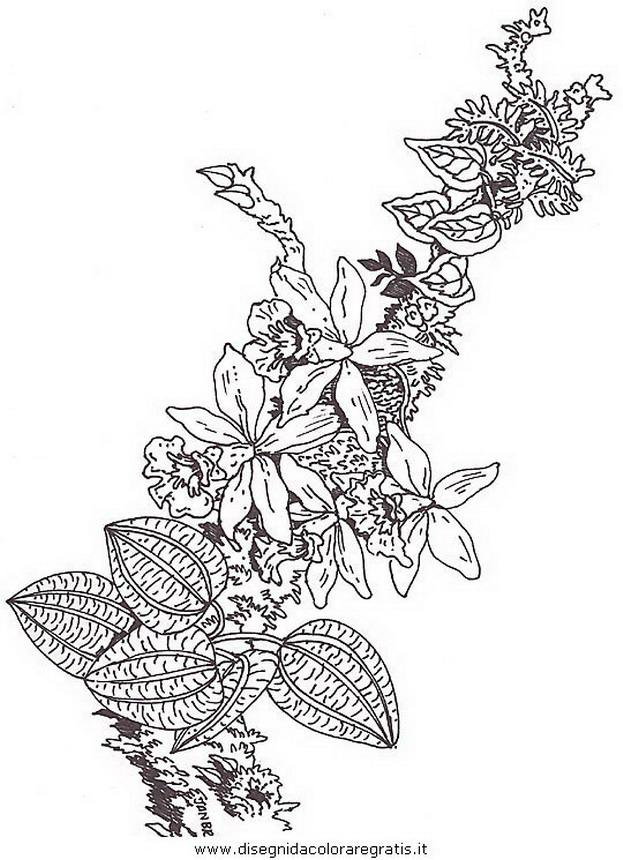 natura/fiori/fiore_fiori_177.JPG
