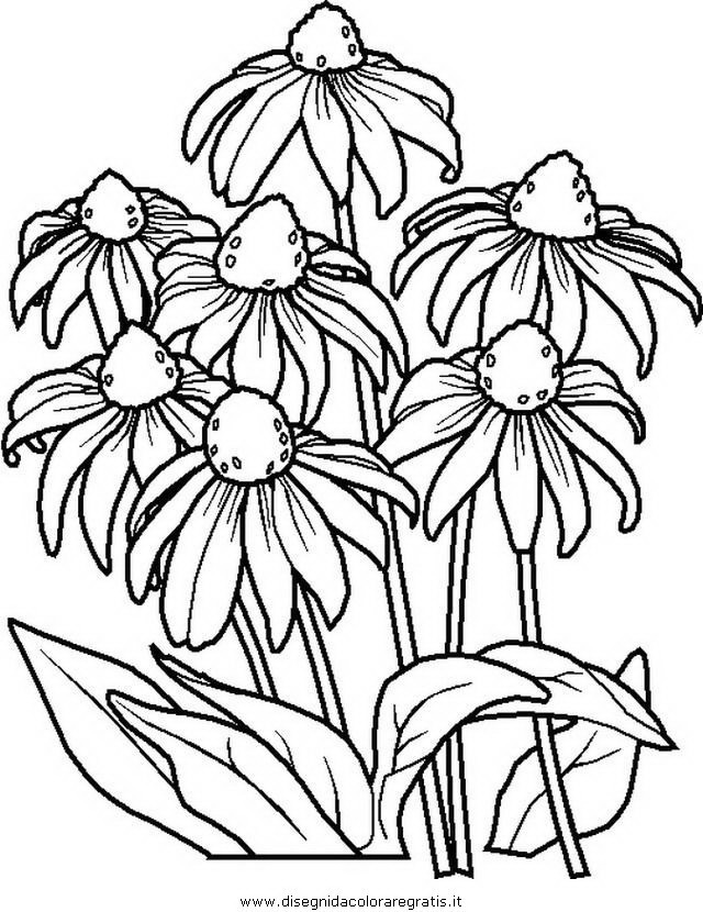 natura/fiori/fiore_fiori_181.JPG