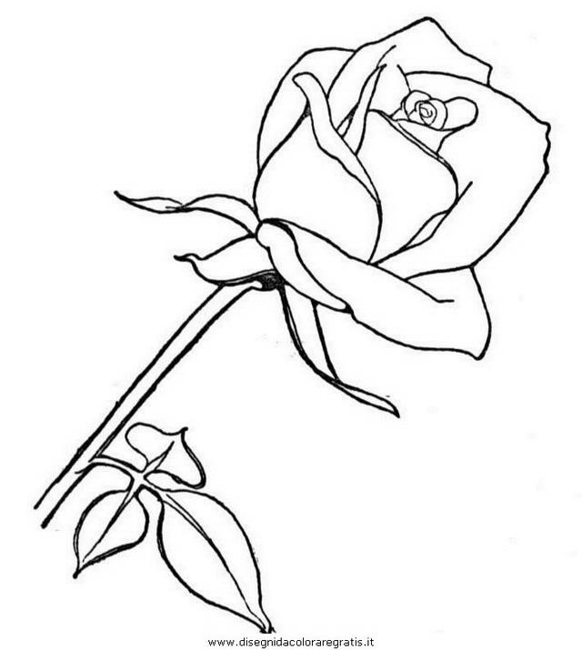 natura/fiori/fiore_fiori_183.JPG