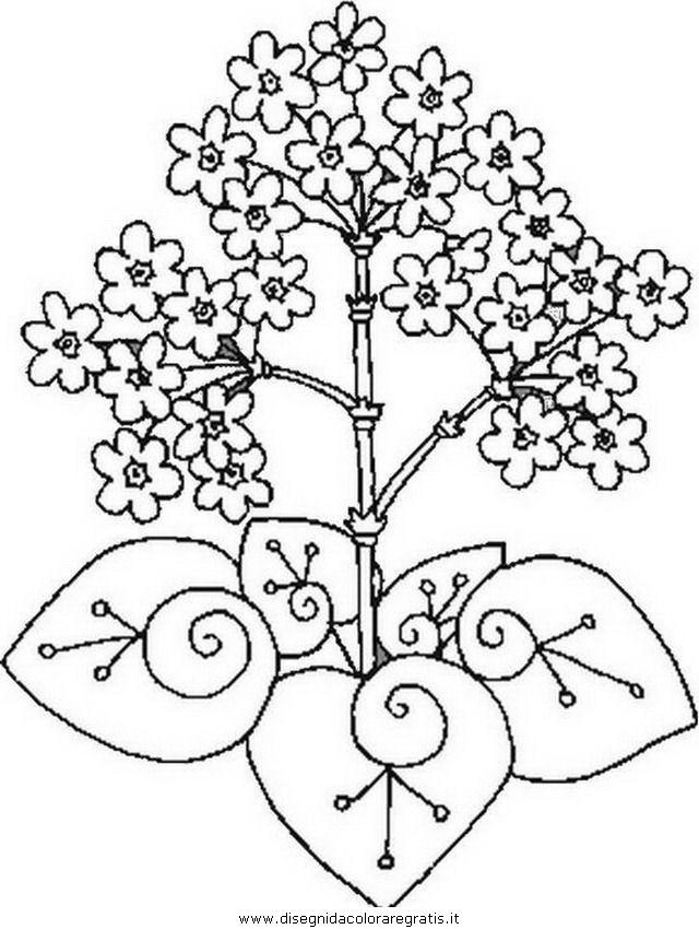 natura/fiori/fiore_fiori_184.JPG
