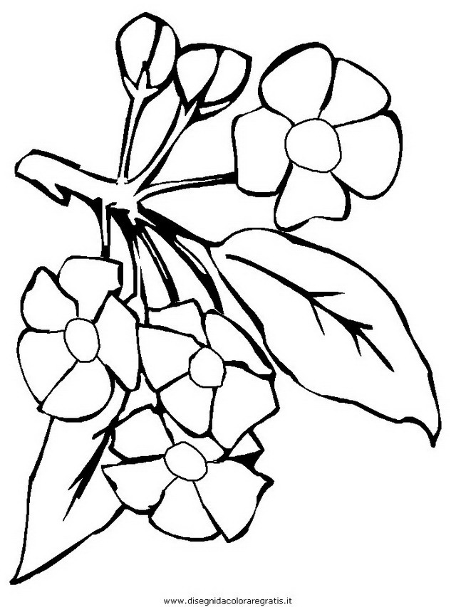 natura/fiori/fiore_fiori_185.JPG