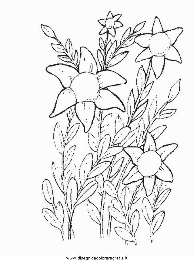 natura/fiori/fiore_fiori_188.JPG