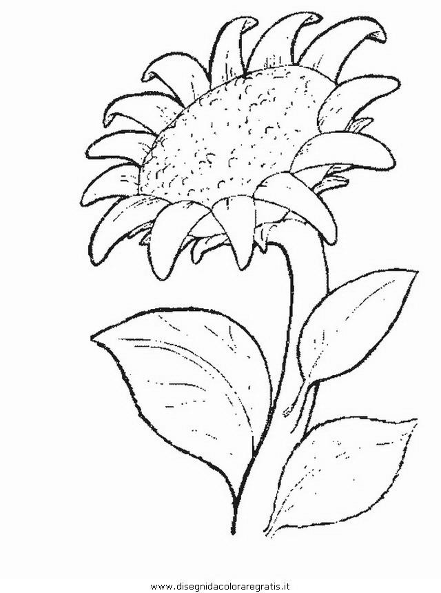 natura/fiori/fiore_fiori_190.JPG
