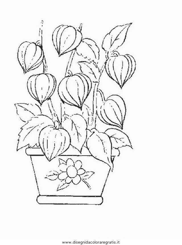 natura/fiori/fiore_fiori_192.JPG