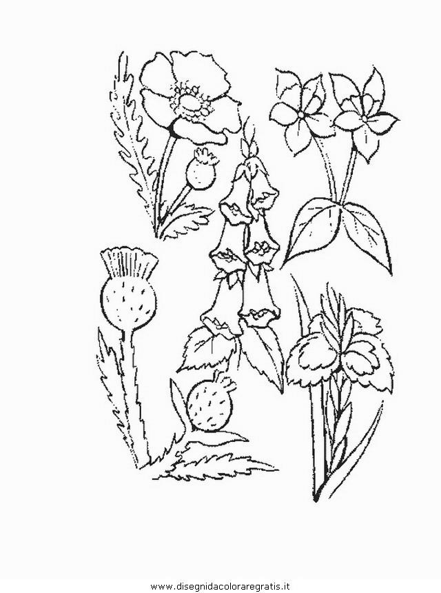 natura/fiori/fiore_fiori_193.JPG