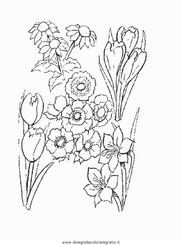 natura/fiori/fiore_fiori_196.JPG