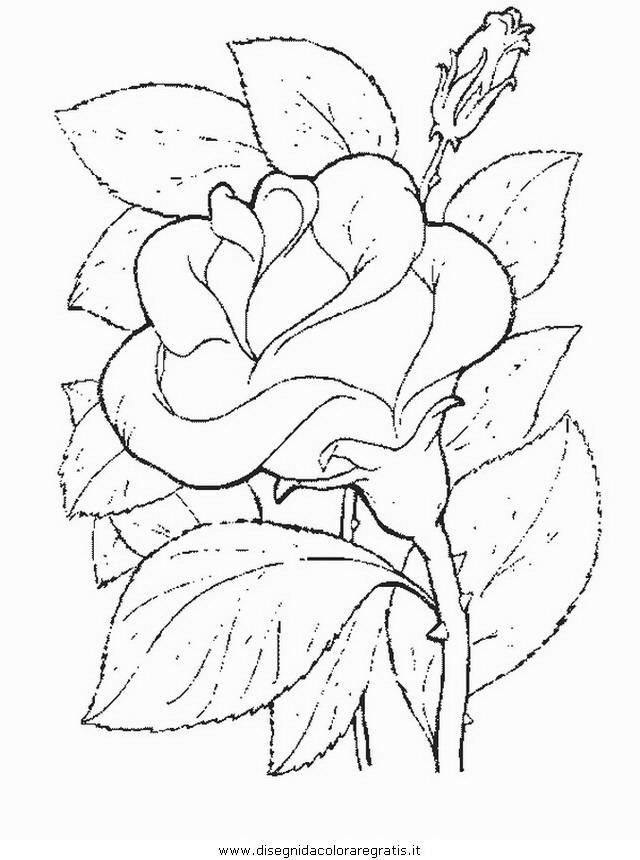 natura/fiori/fiore_fiori_197.JPG