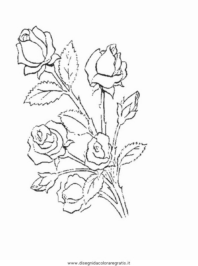 natura/fiori/fiore_fiori_198.JPG