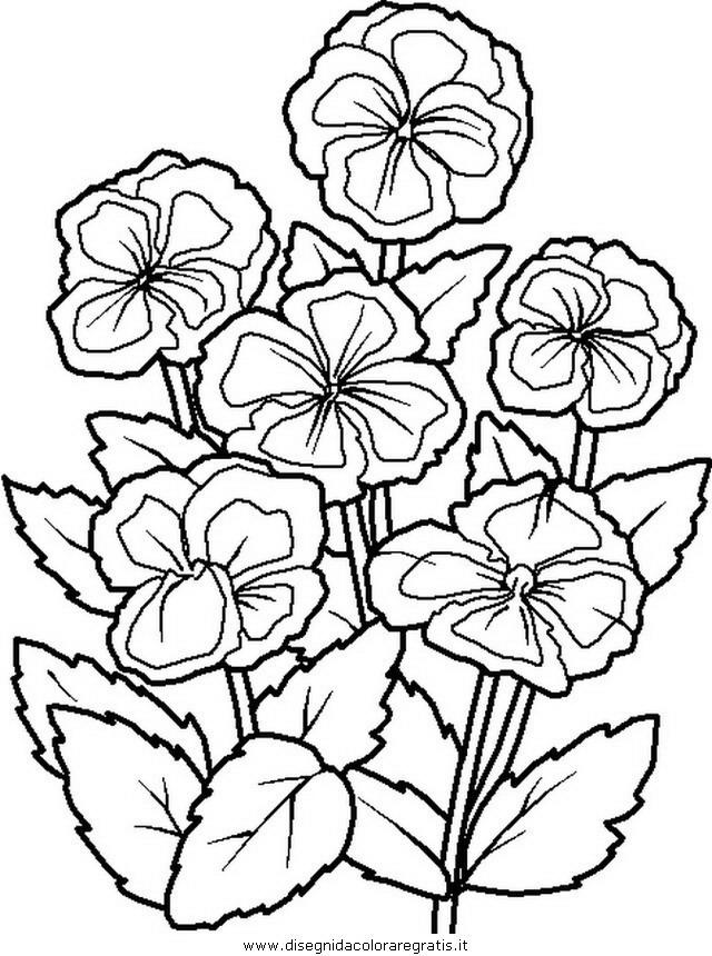 natura/fiori/fiore_fiori_202.JPG