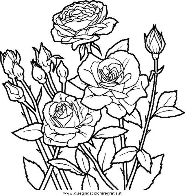 natura/fiori/fiore_fiori_206.JPG