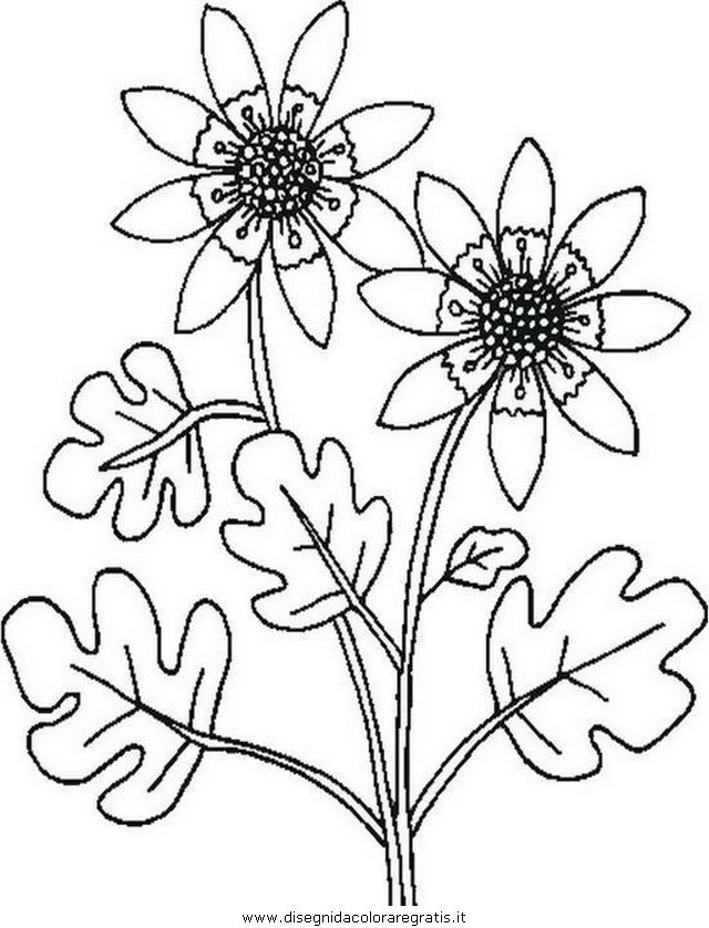 natura/fiori/fiore_fiori_209.JPG
