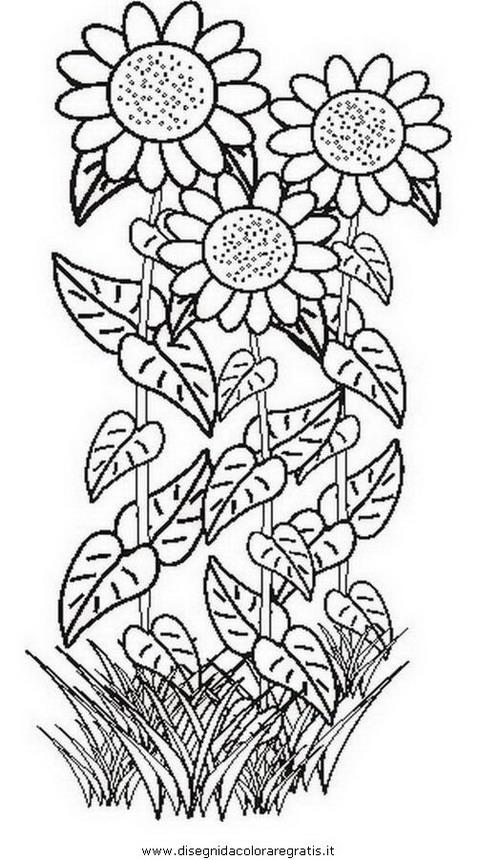natura/fiori/fiore_fiori_212.JPG