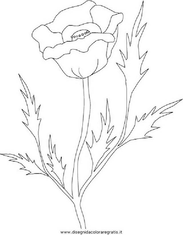 natura/fiori/fiore_fiori_228.JPG