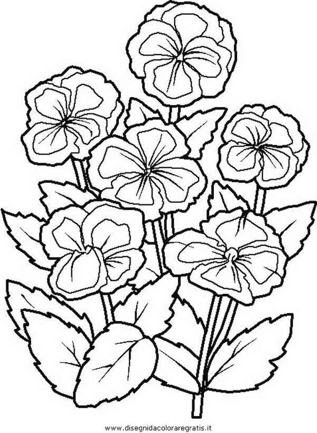natura/fiori/fiore_fiori_234.JPG