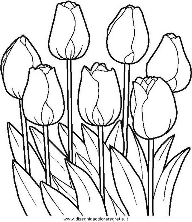 natura/fiori/fiore_fiori_239.JPG