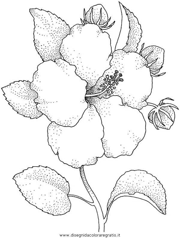 natura/fiori/fiore_fiori_241.JPG