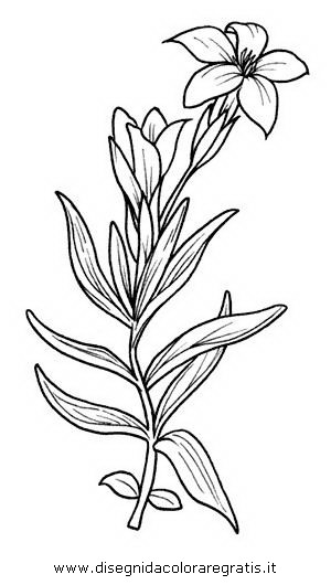 natura/fiori/fiore_genziana.JPG