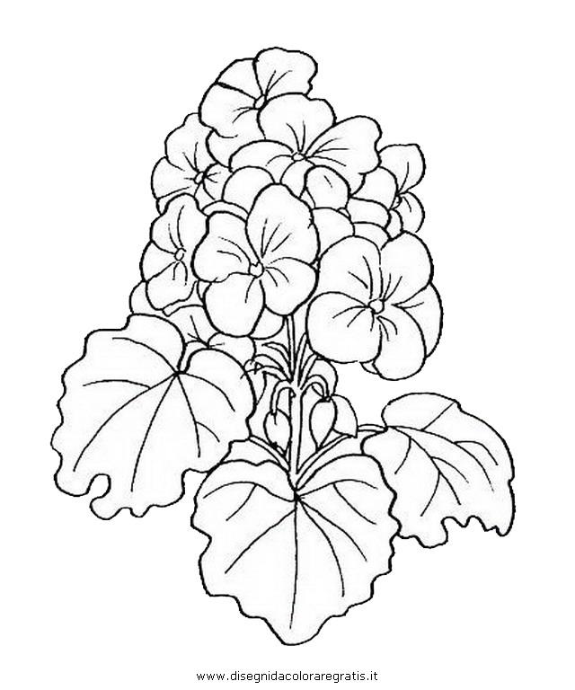 natura/fiori/fiore_geranio.JPG