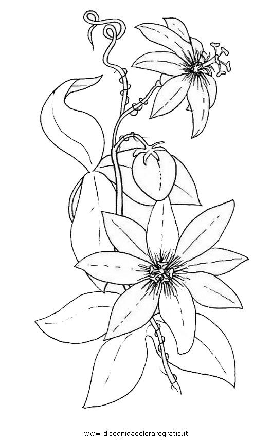 natura/fiori/fiore_passiflora.JPG