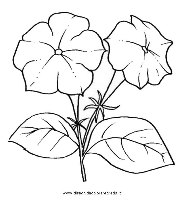 natura/fiori/fiore_petunia.JPG