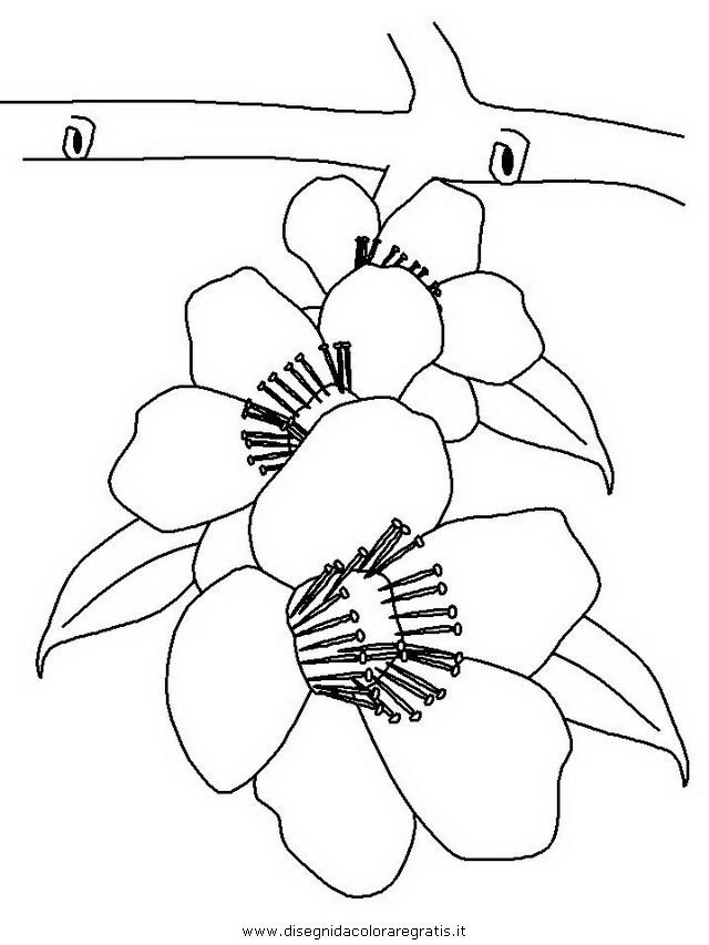 natura/fiori/fiori_di_pesco.JPG