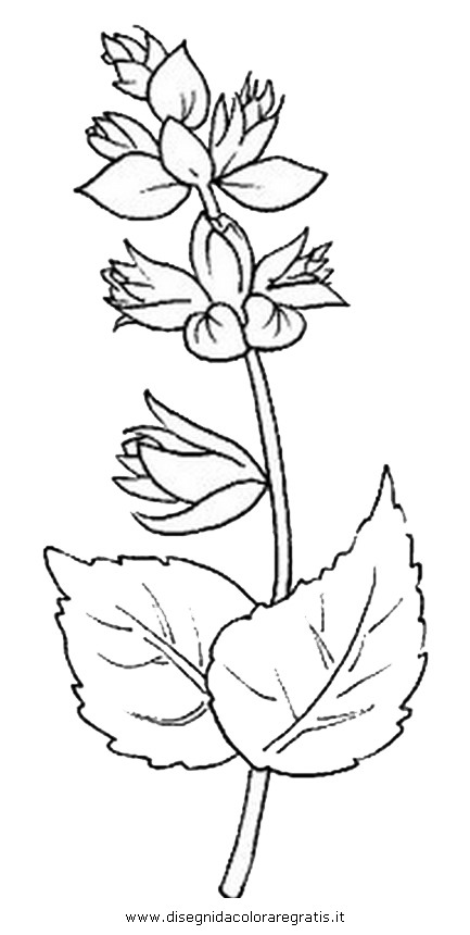 natura/fiori/fiori_fiore_005.JPG