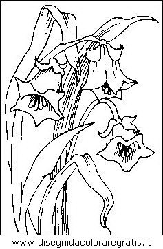 natura/fiori/fiori_fiore_010.JPG